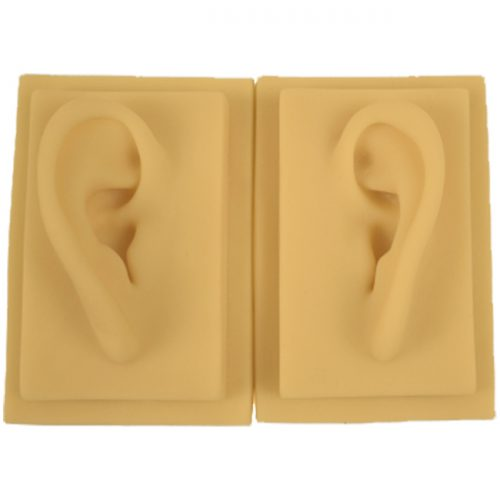 Life size pair 3D Silicon Ear Model